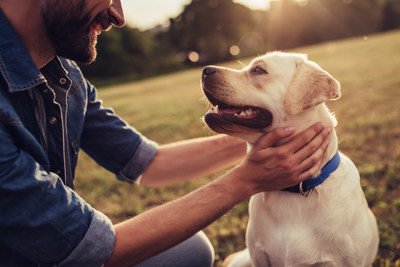 Scientists Outline The Hidden Risk Of Seasonal Changes On Our Pets' Health
