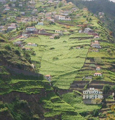 The dramatic hillside vineyards in Madeira, home to Champion of Champions producer Justino's Madeira.